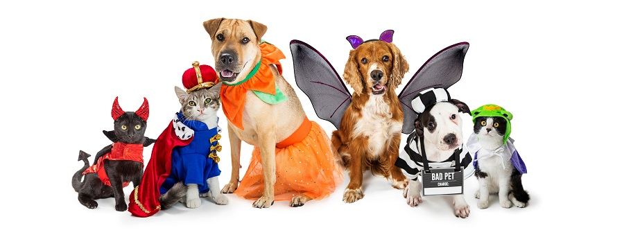 Common Halloween Hazards that Cause Pet Emergencies