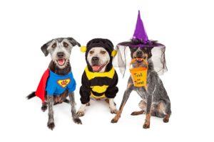 Halloween Hazards for Pets