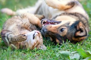 Common Household Hazards for Pets